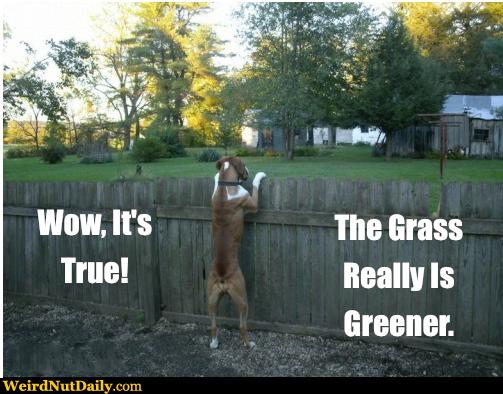 العشب هو متلازمة أكثر خضرة لأصدقائهم السابقين